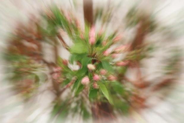 PHOTOROGR - Shutter Zoom - 7087