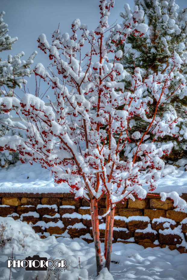 pmx6365-7_crowne-winter-tree-e1-w