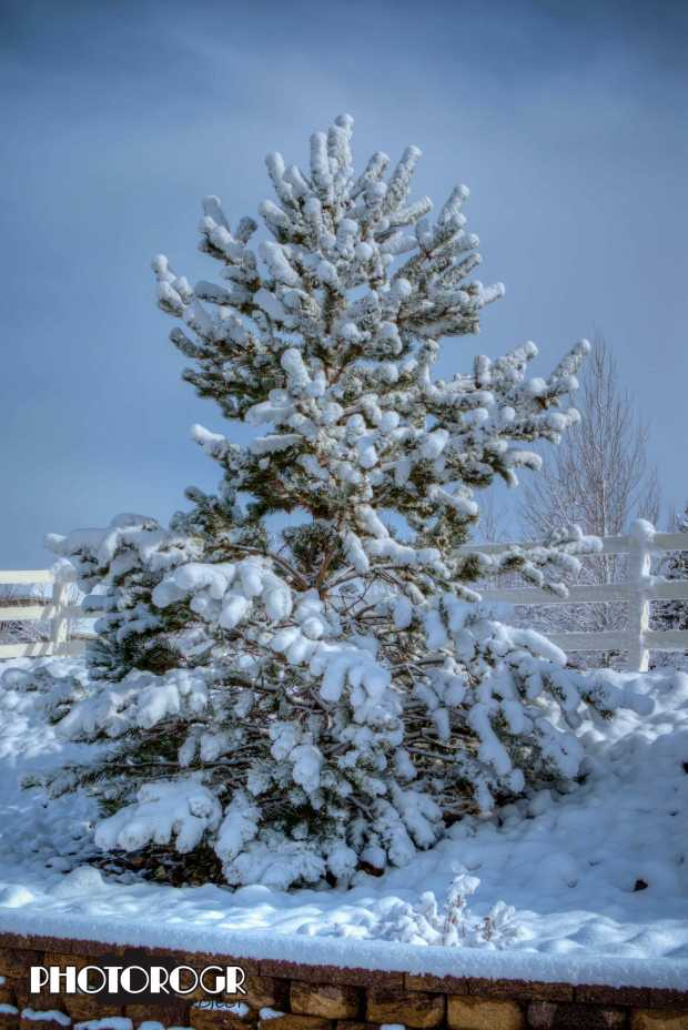 pmx6368-70_crowne-winter-tree-e1-w