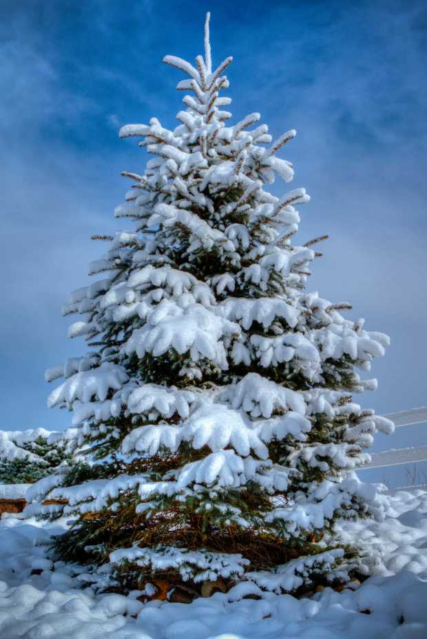 pmx6383-5_crowne-winter-tree-e1b-z-w