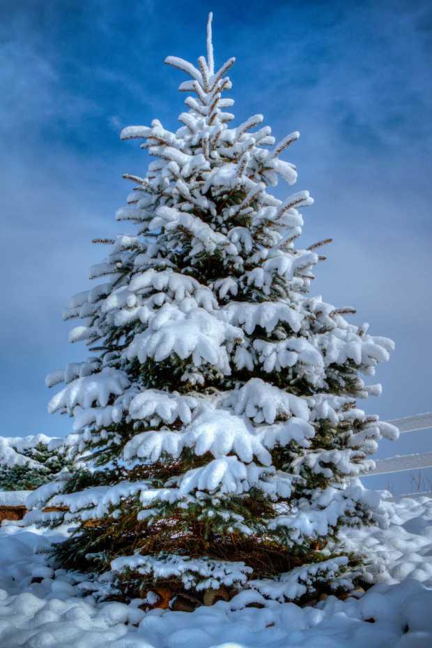pmx6383-5_crowne-winter-tree-e1b-z-w